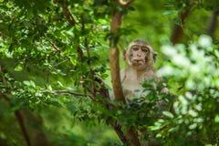 Sentada sospechada del mono en un árbol imagen de archivo