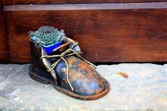 Sentada suculenta verde en el zapato del hierro por la puerta de madera marr?n fotografía de archivo