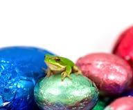 Sentada verde enana de la rana de árbol Fotos de archivo libres de regalías