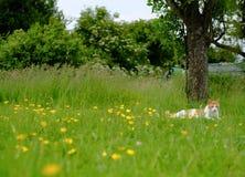 Sentada vista gato adulto de tom en hierba larga en un prado, durante verano fotos de archivo libres de regalías