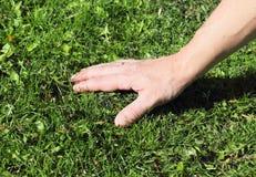 Sentez la main verdir la pelouse image libre de droits