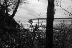 Sentido de la llegada en la playa media de la cala Fotos de archivo libres de regalías