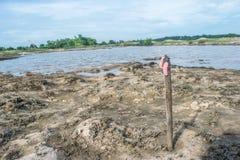 Sentido do ponto ensolarado da praia quando lagoas do nível de maré baixa em Tailândia Foto de Stock Royalty Free