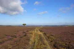 Sentier d'exploitation de Moorland avec le pin Photographie stock libre de droits