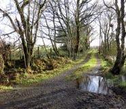 Sentier d'exploitation, hiver, boue et piscines Photo stock