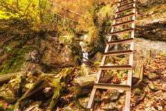Sentier de randonnée à la forêt de montagne d'automne avec la cascade et une échelle image stock