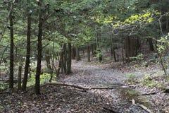 Sentier de randonnée, Ash Cave, Ohio image stock