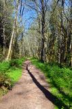 Sentier de randonnée avec l'ombre d'arbre Photos stock