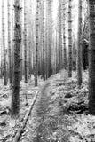 Sentier de randonnée bien usé - marais de Cranesville - la Virginie Occidentale photographie stock