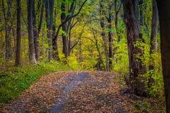 Sentier de randonnée coloré dans le Central Park du comté de Lancaster Photos libres de droits