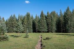 Sentier de randonnée croisant un beau pré alpin vers une forêt de sapin et de sapins sous un ciel bleu photo stock