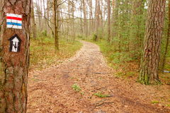 Sentier de randonnée dans la forêt Photographie stock libre de droits