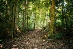 Sentier de randonnée dans le Podocarpus de parc national, Equateur image libre de droits
