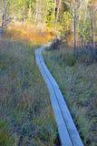 Sentier de randonnée en bois Photos stock