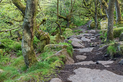 Sentier de randonnée en pierre Image libre de droits