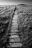 Sentier de randonnée latéral d'océan photo stock