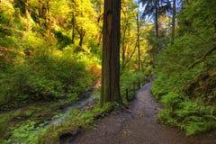 Sentier de randonnée le long de crique de Balch en Forest Park photos stock