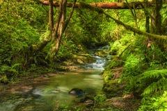 Sentier de randonnée le long de crique de Balch en Forest Park image stock