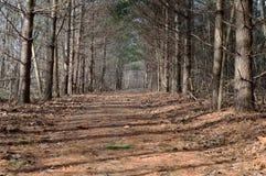 Sentier de randonnée menant la manière Image libre de droits