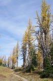Sentier de randonnée par les mélèzes alpins Image libre de droits
