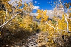 Sentier de randonnée passant par un verger des arbres de tremble photos stock
