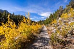 Sentier de randonnée passant par un verger des arbres de tremble image stock