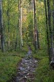 Sentier de randonnée pierreux Photographie stock