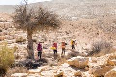 Sentier de randonnée de quatre randonneurs près d'arbre, désert du Néguev, Israël Image stock