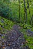 Sentier de randonnée reculé dans la région de Rhin de rivière photo stock