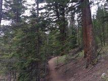 Sentier de randonnée scénique de montagne par le lac Photographie stock libre de droits