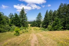 Sentier de randonnée sur les collines de San Francisco Bay du nord, la Californie image libre de droits