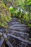 Sentier de randonnée sur Molokai Hawaï Image stock