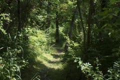 Sentier de randonnée usé dans la forêt image stock
