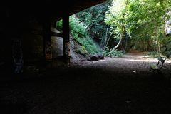 Sentier natur Royaltyfri Foto