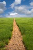 Sentier piéton à l'horizon Photos stock