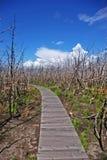 Sentier piéton à la forêt brûlée Image libre de droits