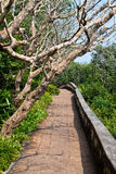 Sentier piéton Photo libre de droits