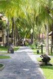 Sentier piéton carrelé sous des palmiers en été photos stock