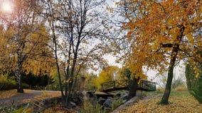 Sentier piéton d'automne en parc de ville avec un pont un jour suny banque de vidéos