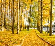 Sentier piéton d'automne par le lac photo libre de droits