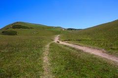 Sentier piéton dans l'herbe verte des prés alpins en montagnes de Caucase Photos stock