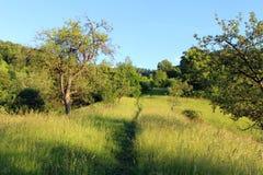 Sentier piéton dans la forêt Images stock