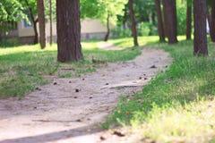 Sentier piéton dans la forêt Photographie stock