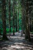 Sentier piéton dans la forêt Images libres de droits