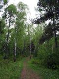 Sentier piéton dans la forêt Image stock
