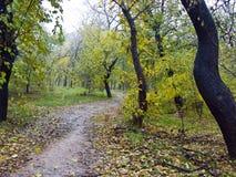 Sentier piéton dans la forêt d'automne Photographie stock