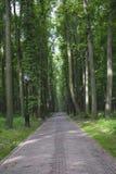 Sentier piéton dans la forêt dense Photographie stock libre de droits