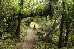 Sentier piéton dans la forêt tropicale aux chaînes de Waitakere Photos libres de droits