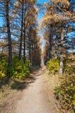 Sentier piéton dans la ruelle par automne Photos libres de droits