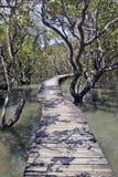 Sentier piéton dans le marais de forêt de palétuvier Photo libre de droits